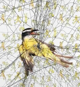 birdnet